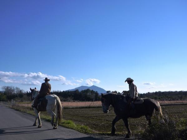 関東連山を眺めながらの乗馬 photo by そとあそび