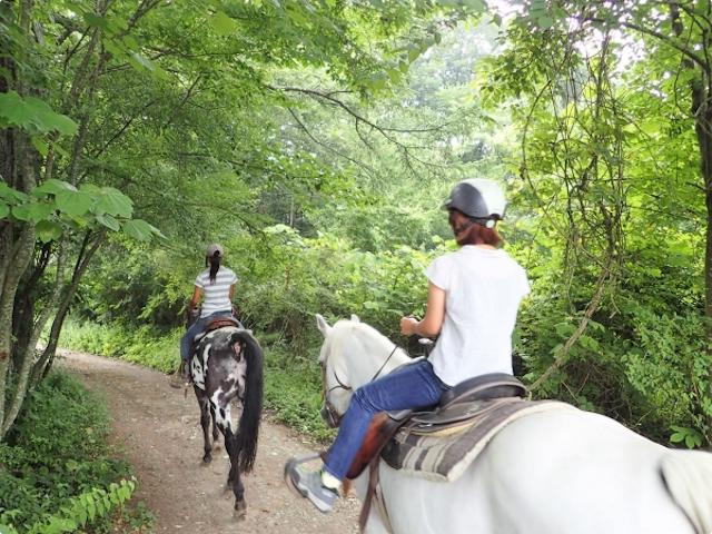 可愛い馬とご対面!photo by そとあそび