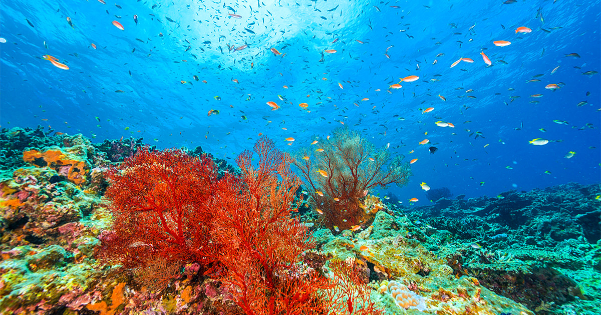 海 浅瀬 小さい魚
