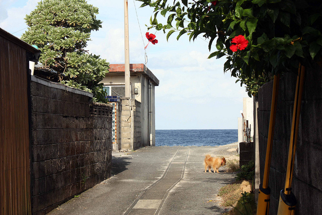 photo by back house path to the sea   Flickr - Photo Sharing!