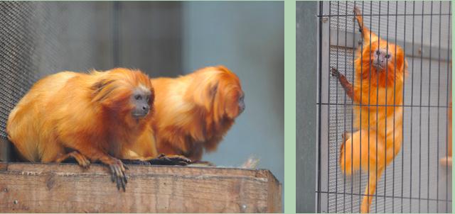 photo by 浜松市動物園公式サイト