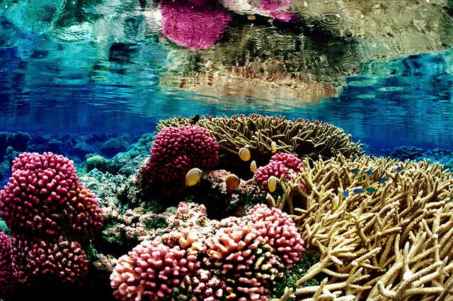 photo by USFWS - Pacific Region