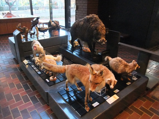 photo by 埼玉県立自然の博物館