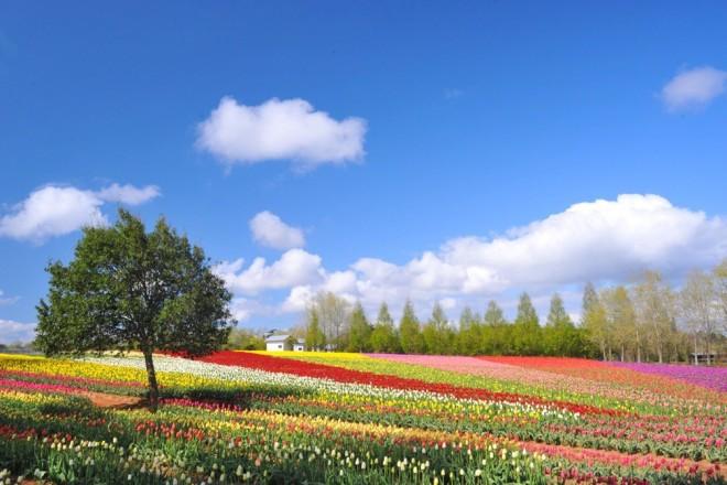 photo by 世羅高原農場