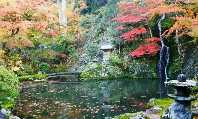 autumn_image_009L