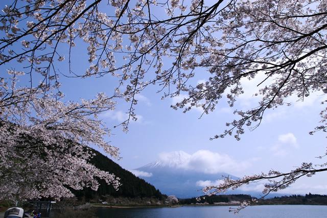 photo by 田貫湖キャンプ場