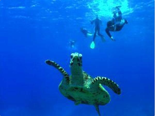 青い海を悠々と泳ぐウミガメ【夏】photo by そとあそび
