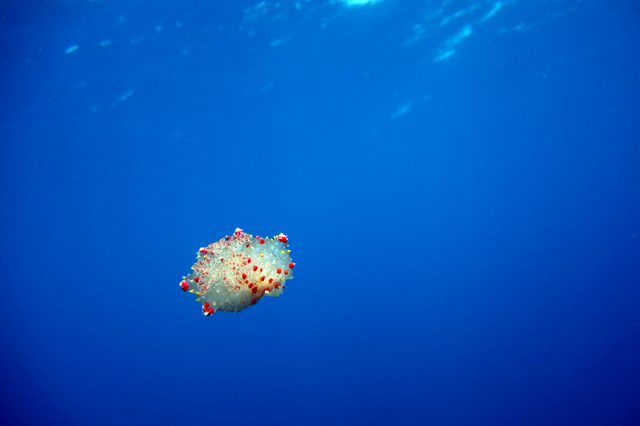 photo by diver403