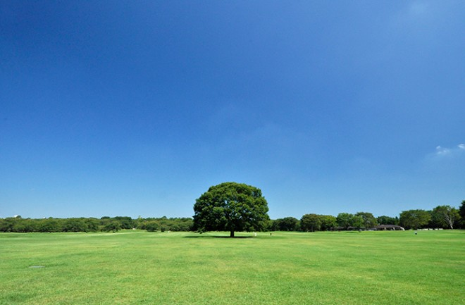 photo by 国営昭和記念公園