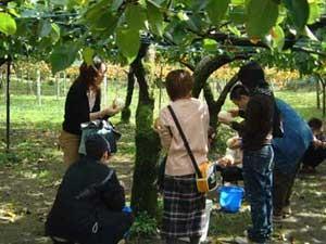 photo by 古宇田農苑(こうだのうえん)~茨城県 梨 ぶどう 栗 柿 いちご狩り たけのこ掘り バーベキュー