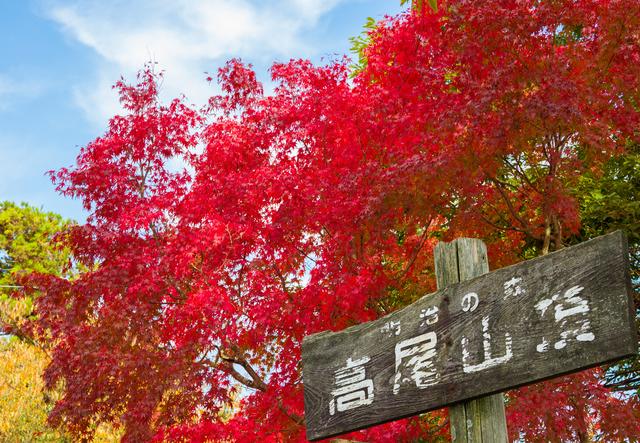photo by farmer