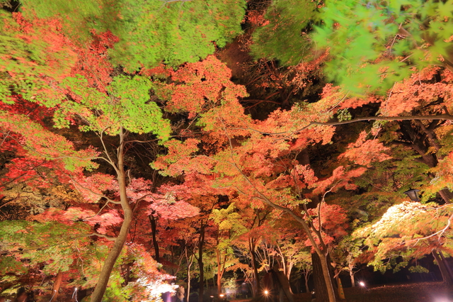 「紅葉のライトアップ」photo by kazukiatuko