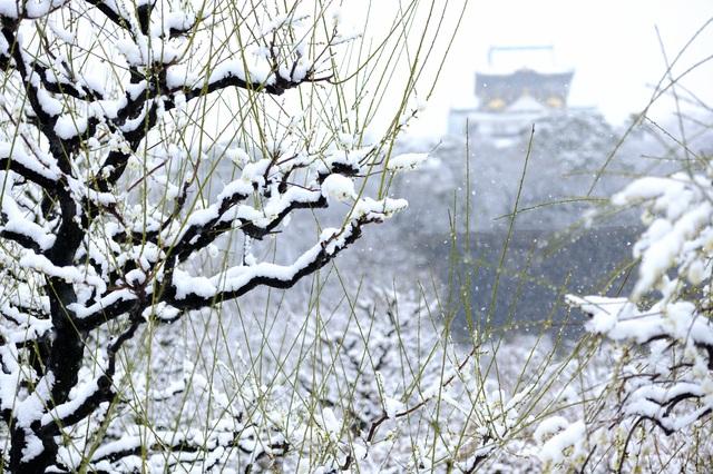 「大阪城と梅」photo by hurricane