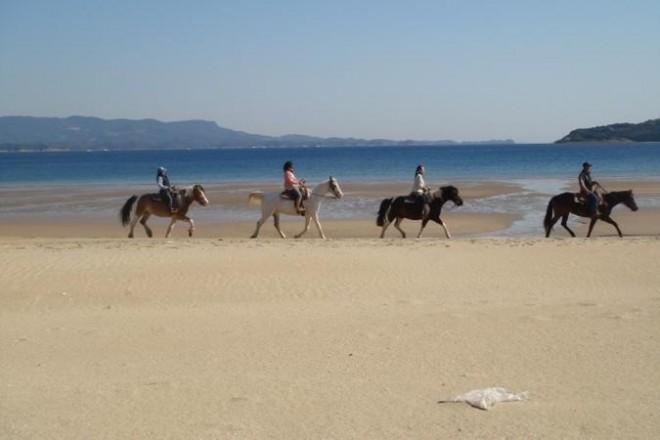 平戸海岸 ホーストレッキング(乗馬)/シービューランチ|そとあそび