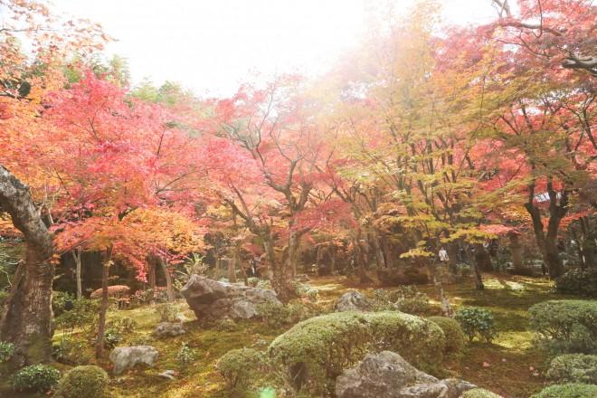 photo by Norio NAKAYAMA