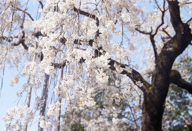 photo by shuzo serikawa
