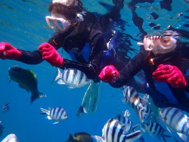海面近くまで魚たちが寄ってくる!photo by そとあそび