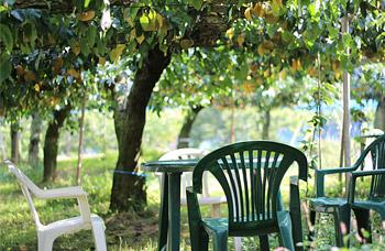 photo by 関東・茨城:果物狩り(ぶどう狩り・梨狩り)食べ放題:さんろく果樹園|かすみがうら市|茨城県