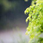 【那須】雨の日もへっちゃら!楽しく過ごせる観光施設10選