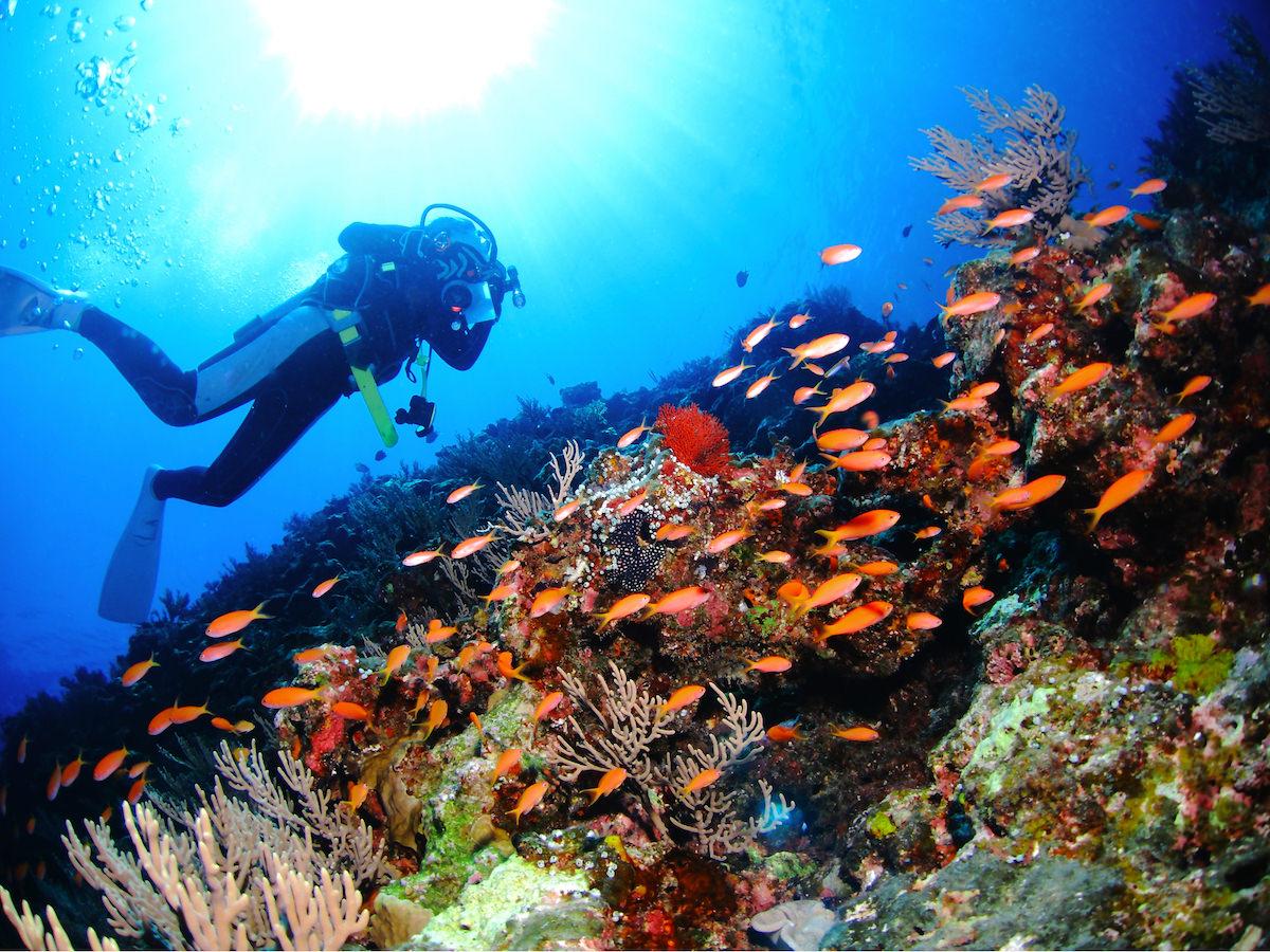 沖縄でダイビング・スキューバダイビングのライセンスを取りたい!気に ...