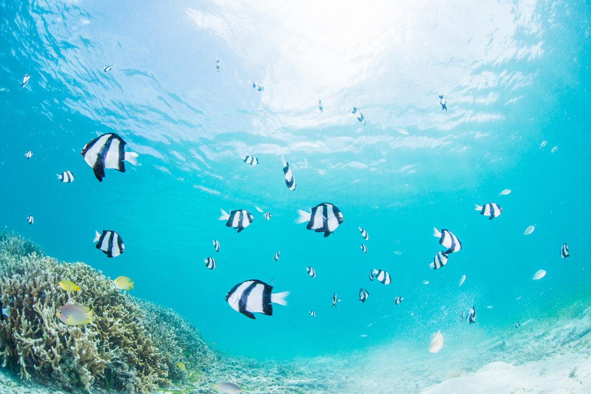 沖縄 海 熱帯魚