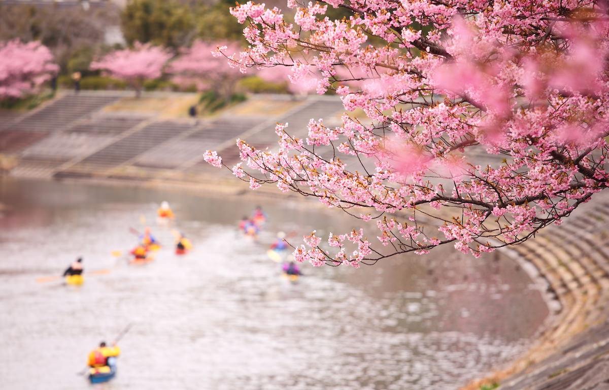 桜 カヌー カヤック