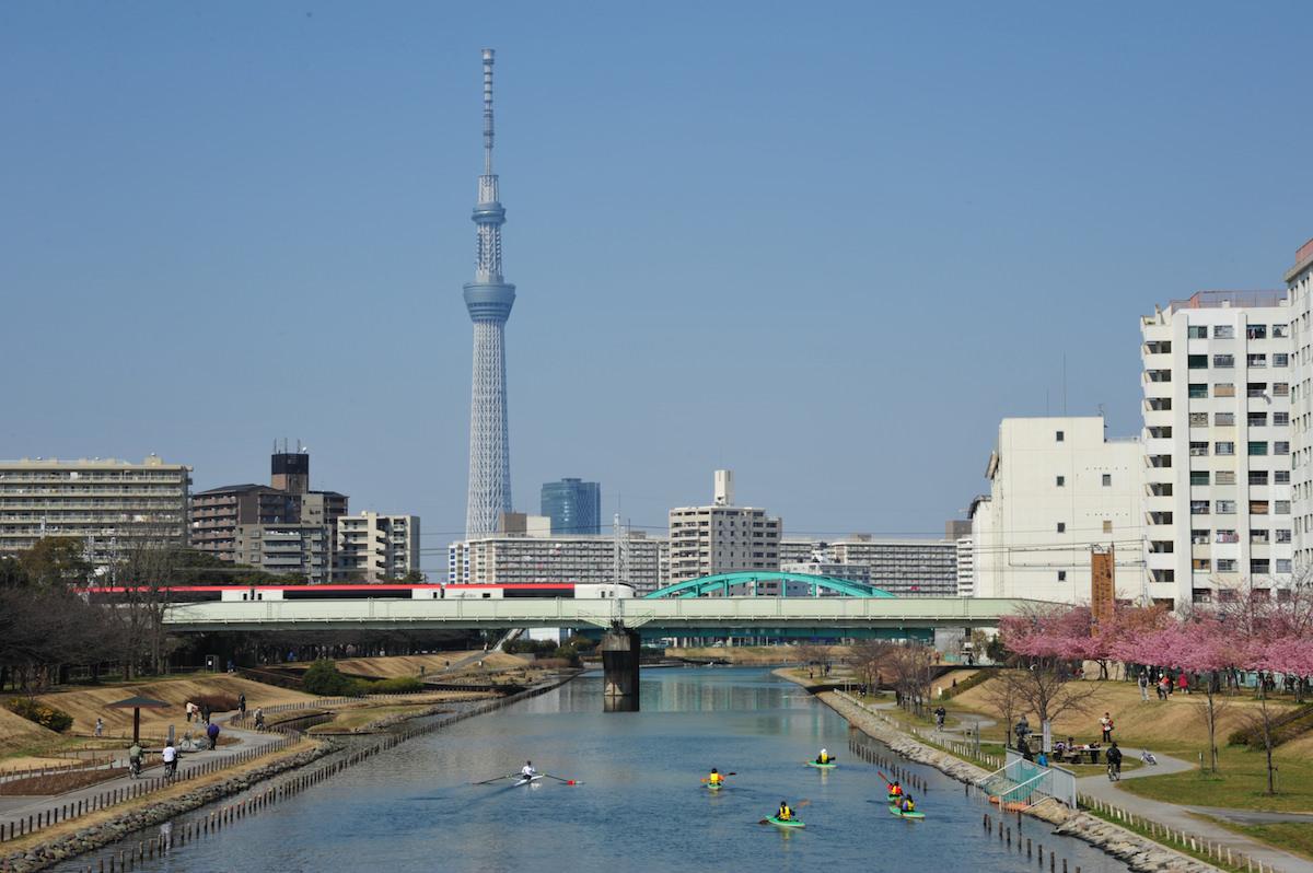江戸川 東京 カヌー
