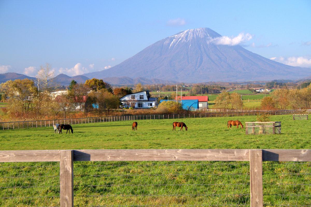 北海道 乗馬
