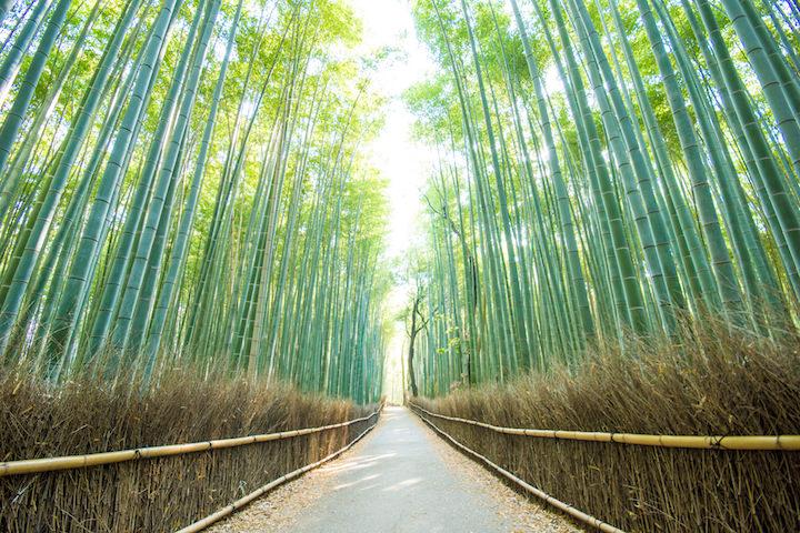 京都嵐山・竹林の道