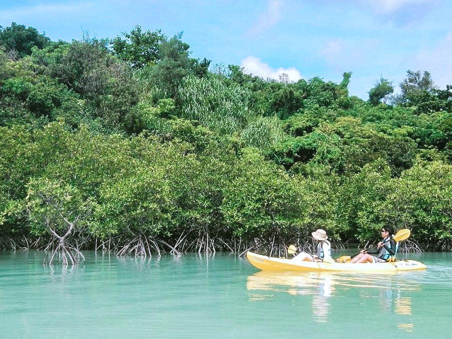 mangrove-kayak_mini