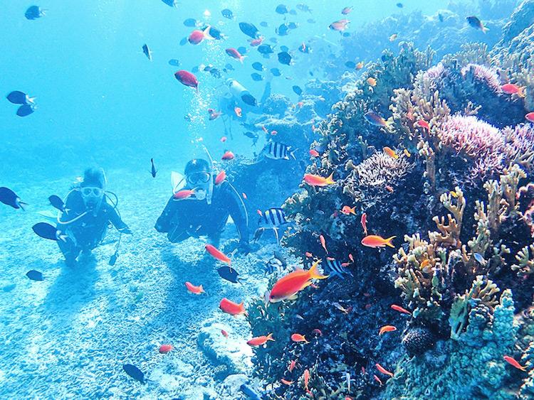 沖縄県 慶良間諸島 座間味島 ダイビング