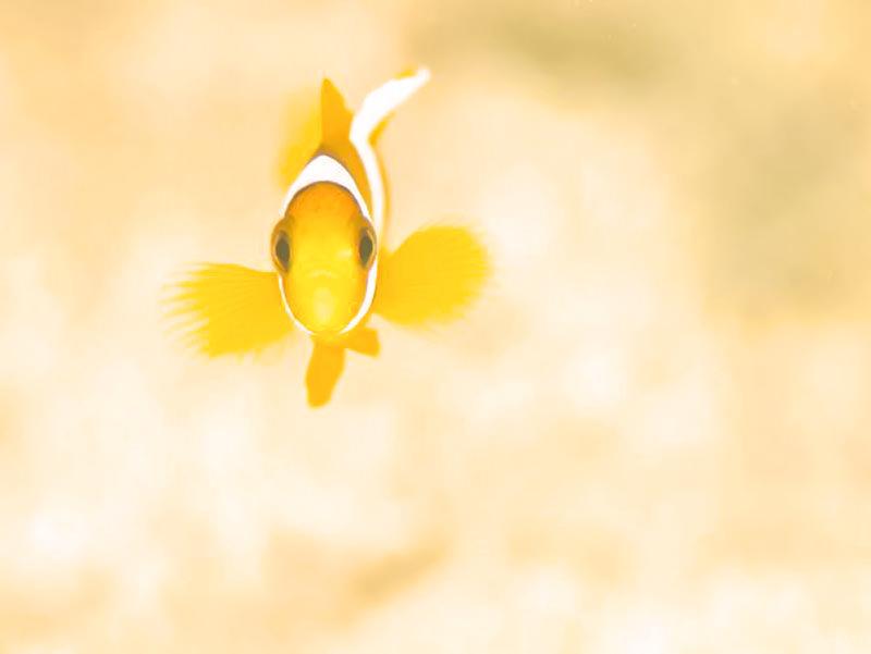 kyushu-snorkell_mini