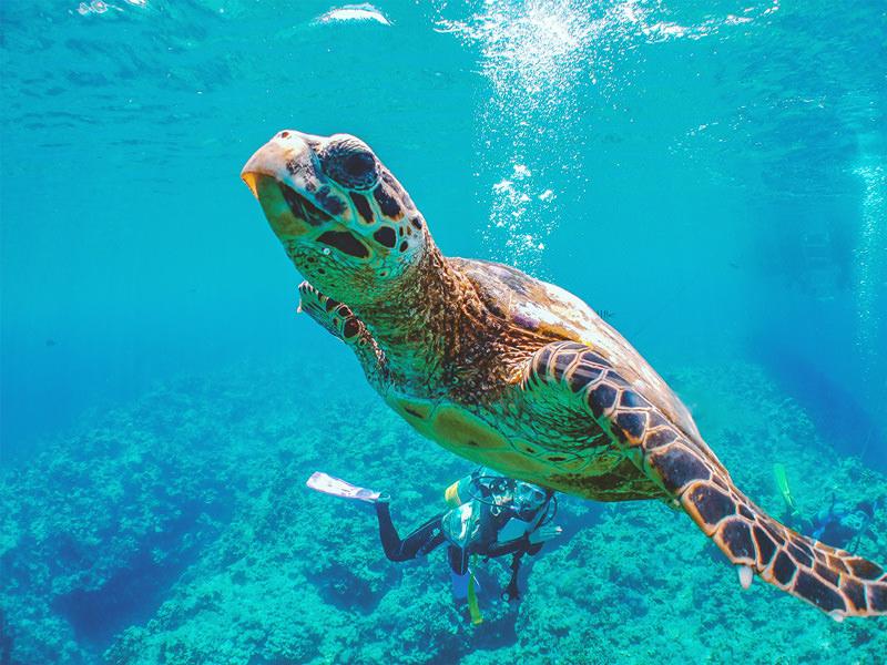 沖縄県 慶良間 ダイビング