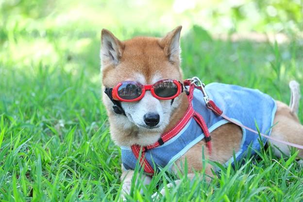 photo by 2014.08.16 和泉川 犬にdoggles - 写真共有サイト「フォト蔵」