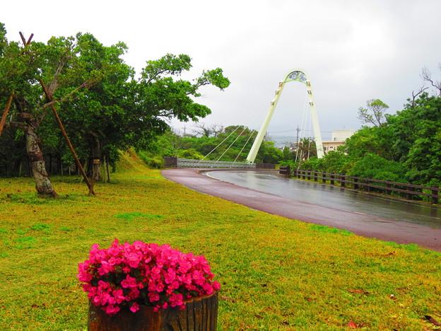photo by 西表カイネコ
