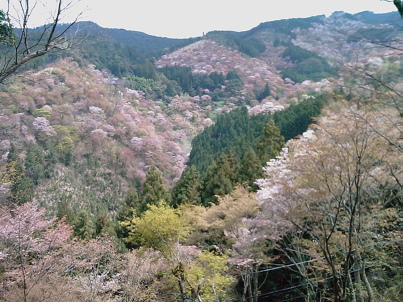 photo by File:吉野山 - panoramio - usui.mobile.jpg - Wikimedia Commons