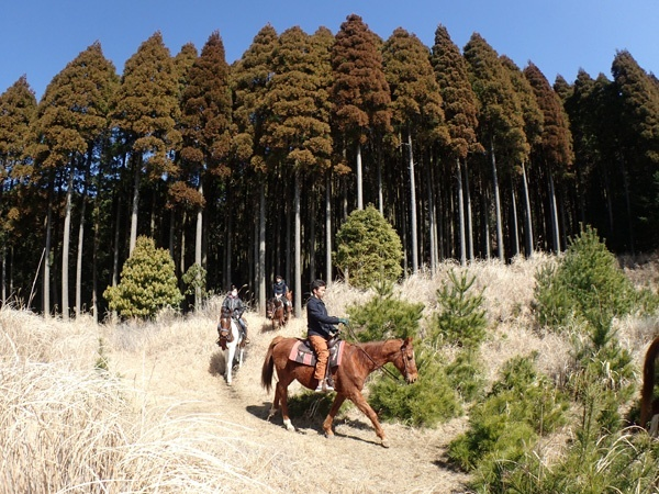 photo by 《80分ホーストレッキング》 森・草原・眺望、森林探検エリアも楽しめる!霧島の大自然を馬に乗り満喫! (宮崎県・都城・霧島)|そとあそび