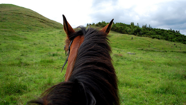 photo by Horseback Riding in New Zealand | Flickr - Photo Sharing!