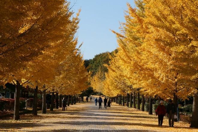 Photo by www.butamisodon.jp