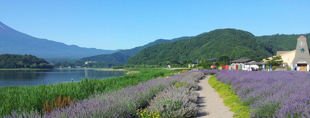 photo by 河口湖大石公園