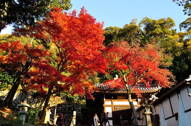 photo by Tohru Watanabe