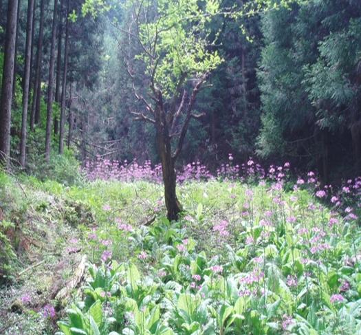 photo by 京都 大森リゾートキャンプ場