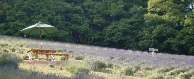 photo by NANAKAの花畑