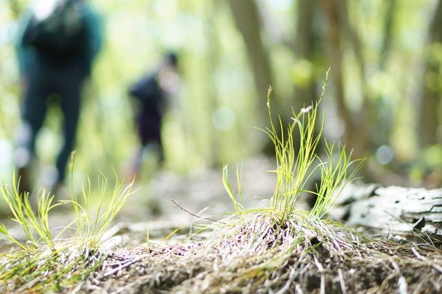 photo by suguru