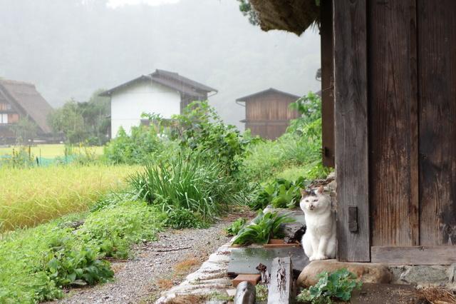 photo by Ido