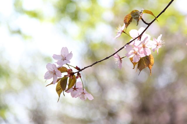 photo by kyoko-photography
