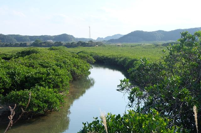 種子島のマングローブ風景 photo by makoto creates