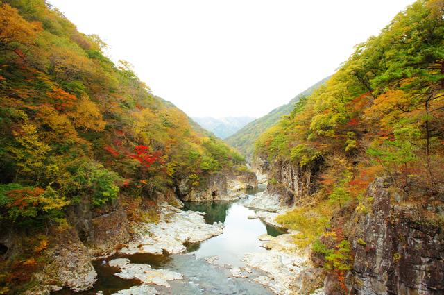 photo by kurosuke