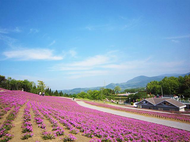 photo by 芝桜の丘│霧島高原 まほろばの里